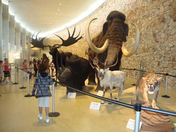 musée préhistoire verdon