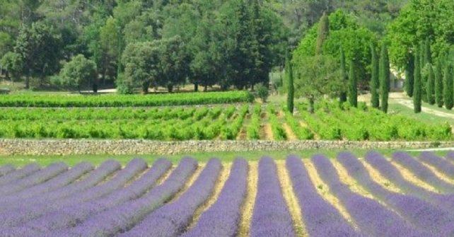 """Aufenthalt """"Kunst des Lebens und der Kultur"""" in der Provence Verte & Verdon"""
